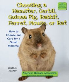 how to take care of baby gerbils