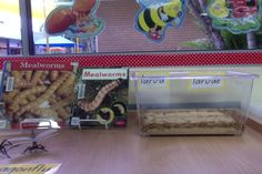 Science: Mealworms in the classroom