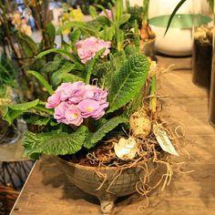 Primula er da lig med forår  #primula #forår #marts #købblomster #getinspired #dk #odensem #blomstererskønt #friskeblomster #bloomit #forårsbeplantning #plantedekoration #sammenplantning