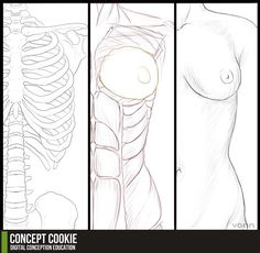 Anatomy Resource: Female Upper Body by ~ConceptCookie on deviantART