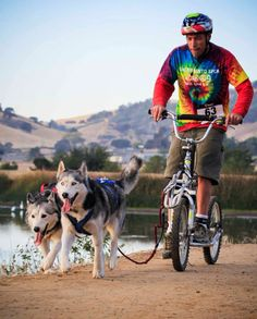 Pawtrekker Dog Scooter in California http://www.snowpawstore.com/dog-scooters/dog-scooter.html