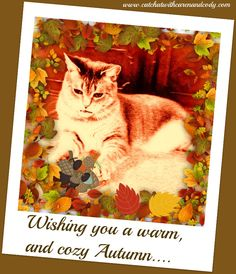 Cat Chat With Caren And Cody: Warm Autumn Wishes:Wordless Wednesday