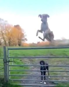 Silly Dogs, Cute Funny Dogs, Cute Funny Animals, Cute Animal Videos, Cute Animal Pictures, Beautiful Dogs, Animals Beautiful, Funny Animal Jokes, Animal Memes