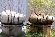 Оригинал взят у tanjand в Alastair Heseltine Alastair Hese Concrete Crafts, Concrete Art, Concrete Garden, Concrete Stone, Concrete Sculpture, Stone Sculpture, Bonsai Art, Bonsai Garden, Bonsai Plants