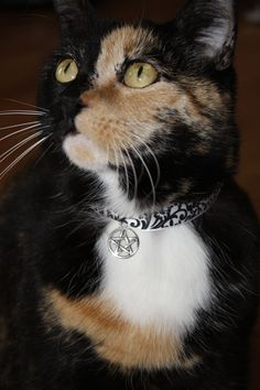 made my cats new collars out of ribbon, velcro, and a pentacle charm! ©