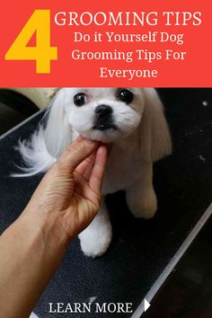 74 best puppy grooming images on pinterest shih tzu dog doggies great tips for washing a dog solutioingenieria Choice Image