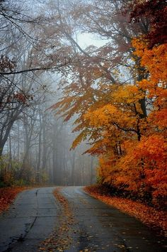 A quiet road a cool misty Fall afternoongreat for country drives looking f Schöne Naturbilder Composition Photo, Autumn Scenes, Autumn Aesthetic, Fall Pictures, Mists, Nature Photography, Travel Photography, Beautiful Places, Beautiful Pictures
