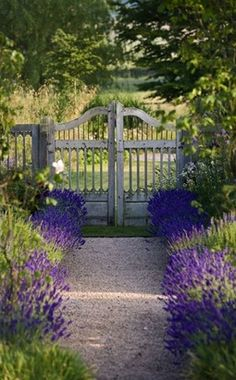 Lavender borders alongside path to rustic gate