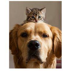 """F A S H I O N O V E L Y na Instagramie: """"Tag your best friend photo via @vogue_dream by Animals"""""""