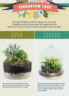 How to care for open vs closed terrariums - Garden wedding Terrarium succulentes