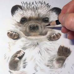 Iris Drawing, Feather Drawing, 3d Art Drawing, Baby Animal Drawings, Animal Sketches, Cute Drawings, Hedgehog Drawing, Hedgehog Art, Watercolor Paintings For Beginners