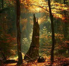 authentic fauxhemian - sosuperawesome: Wandering in the Woods, Oer-Wout