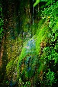 The most beautiful rain forest located in Arizona, Tonto Natural Bridge area