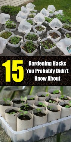15 simple gardening hacks you probably didn& know about . - 15 simple gardening hacks you probably didn& know about – - Gardening For Beginners, Gardening Tips, Organic Gardening, Flower Gardening, Gardening Quotes, Greenhouse Gardening, Gardening Supplies, Planting Flowers, Flowers Garden