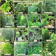 Moestuin. Overzicht alle artikels. Groenten kweken in een moestuin of groentetuin.