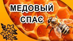 Медовый Спас. Православные праздники в августе