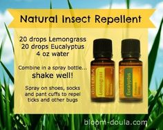 Keep those bugs away naturally with essential oils