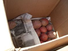 How to Store Root Vegetables in Boxes in a Cellar