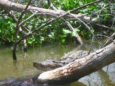 Kolibries en Cash Crocs