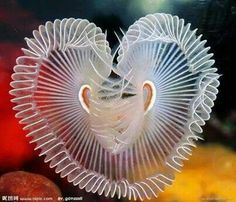 A slinkey fish