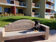 Roscoe Enjoying The Seacrest Oceanfront Hotel In Pismo Beach Is Dog Friendly