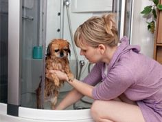 Tips To Care For Female Dog In Heat/Menstruation - BoldSky.com
