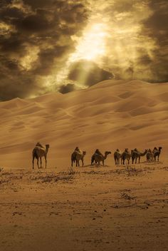 Camels in desert during a cloudy day. - Virtual Assistance Corner - - Camels in desert during a cloudy day. Camelus, Karbala Photography, Desert Places, Deserts Of The World, Desert Life, Desert Sunset, Dubai Desert, Amazing Nature, Belle Photo