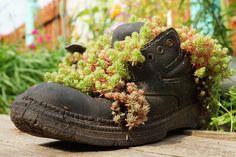 Dieser einsame robuste schwarze Stiefel dient als Pflanzer und hat seine schwachrankenden Pflanzen, die alle über sie heraus platzen.