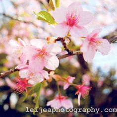 Japanese cherry blossoms Cherry Blossom Theme, Cherry Blossoms, Leather Projects, Floral Designs, Wedding Themes, Project Ideas, Beautiful Flowers, Bedrooms, Relax