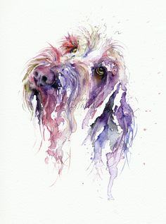 Spinone quirky and colourful pet portrait style Watercolour by artist Jane Davies
