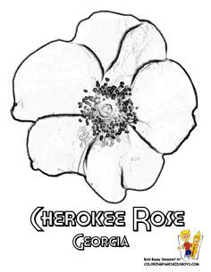 Hawaii State Flower Coloring Page | Yellow Hibiscus | USA Coloring ...