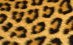 La Coquette Miseráble: { BLACK   GOLD } ... & LEOPARD EARS.