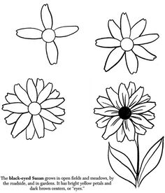 How to Draw Flowers black-eyed susan