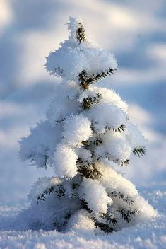 Fresh snow on trees is so pretty Winter Szenen, Winter Magic, Snow Pictures, Nature Pictures, Winter Photography, Nature Photography, Snow Scenes, Winter Beauty, Winter Pictures