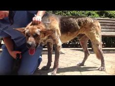 Please help Axel, the dog that crawled out of HELL - Lets Adopt! Global