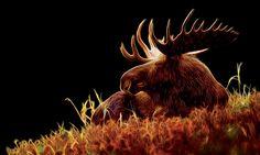 Moose Fractal by Terrazzo