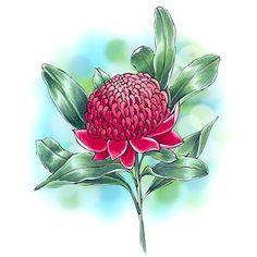 Waratah Flower Digi Stamp in Digital images