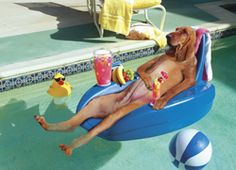 Google Image Result for http://www.supercoolpets.com/pictures/PoolDog-thumb-250x181.jpg