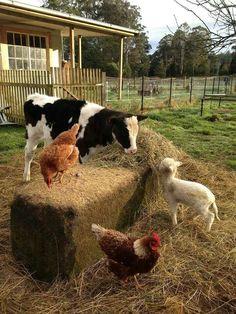 Lovely farm animals - Farm animals roam around the farm happily. Country Farm, Country Life, Country Living, Country Roads, Farm Animals, Animals And Pets, Cute Animals, Happy Animals, Animals Images
