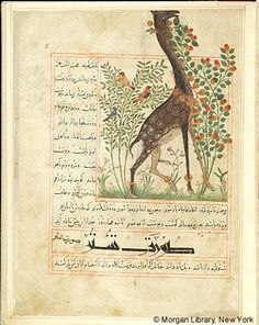 Bestiary, Giraffe; in background, birds in tree and flowering tree.- The Morgan Library & Museum