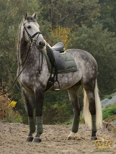 Anky pad in Thyme. This colour looks good on almost any horse, but I love it on this grey