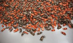"Ai Weiwei. deteail of ""He Xie"" ceramic crabs installation. via The New York Times"