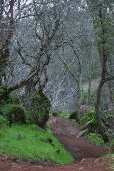 On the trail to Hidden Falls, Auburn California #treescansayitall #california #nature