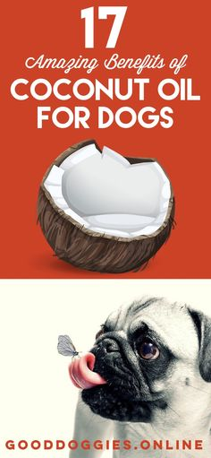 If you're looking for a healthy natural supplement for your dog, check out these benefits of coconut oil for dogs. Some may surprise you.