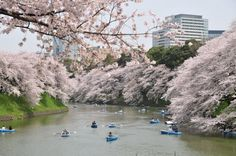 Imperial Palace and the surrounding cherry blossoms - JAPAN