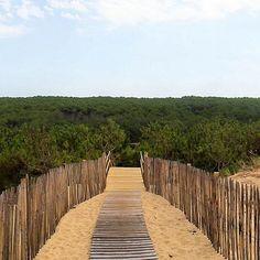 #mimizan  #mimizanplage  #landes  #sable  #dune Vue sur la forêt de pins depuis le haut de la dune