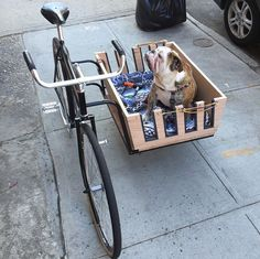 Cargo bike with dog basket Bicycle Sidecar, Bicycle Cart, Dog Trailer, Velo Cargo, Biking With Dog, Side Car, Hamster, Pet Carriers, Cool Bicycles