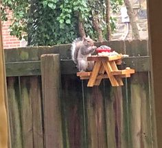 This Picnic Table Squirrel Feeder Lets Your Backyard Squirrels Sit Down To Eat Their Meals Cute Baby Animals, Funny Animals, Wild Animals, Wood Projects, Woodworking Projects, Build A Picnic Table, Picnic Tables, Bird Houses, Green Houses