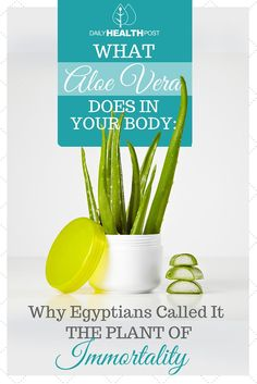 Aloe Vera is commonly thought of as a cute and easy to care for plant that instantly brightens any home.