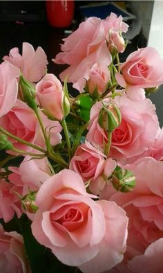 A bunch of roses, buds to full bloom. Beautiful Flowers Wallpapers, Beautiful Rose Flowers, All Flowers, Flowers Nature, Exotic Flowers, Amazing Flowers, Pink Rose Flower, Good Morning Flowers, Arte Floral